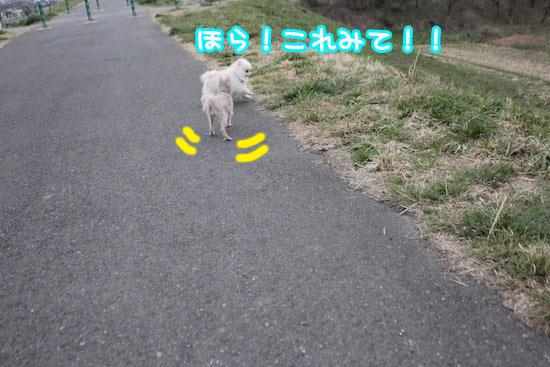 Img_96731