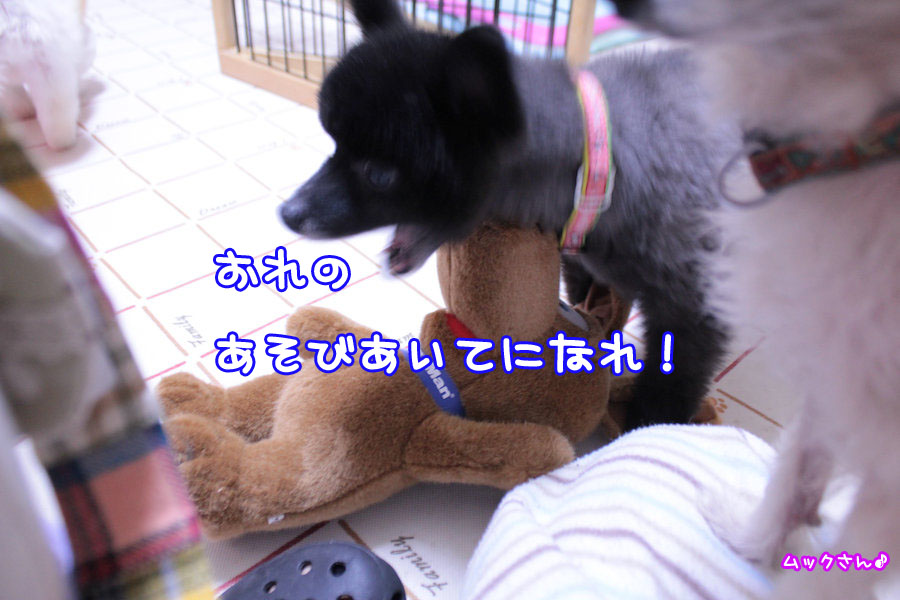 Img_02431_2