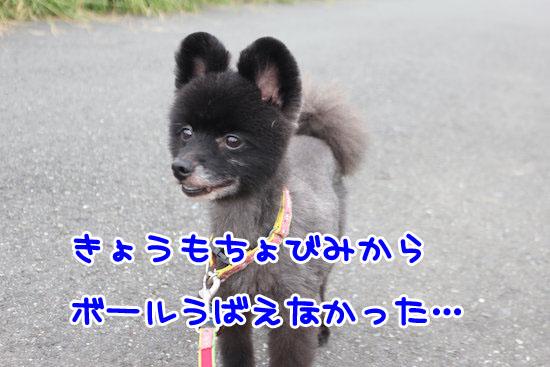 Img_33011
