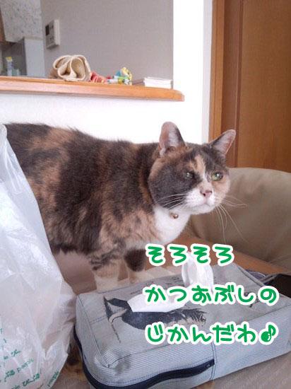 Dsc_05031